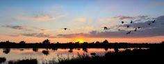 RistoItalia--Ristorante-Albergo-Italia-escursioni-nautiche-passeggiate-cavallo-mare-spiaggie-biciclette-cicloturismo-pesca-RistoItalia, Restaurant, Hotel, Italy,  Desk-nautical-walking-horse-sea-beach-bike-cycling-fishing-delta del po - Cerca con Google