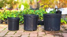 Understanding Plant Pot Sizes | Lots of Plants