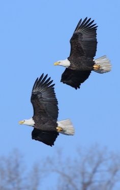 Beautiful park in northern Illinois.  Great place to see bald eagles in the winter months!