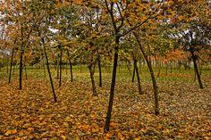 fall by Yılmaz  Savaş Kandağ on 500px