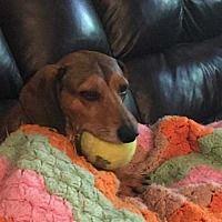 Pin By Lea Nichols On Helping Precious Animals Dachshund