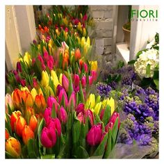 Supporting local growers and markets to source the freshest and most beautiful tulips, hyacinths and flowers of the season.