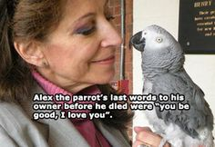24 Animal Stories That Will Hit You Right In the Feels