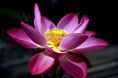 Lotus - Bali - Angel Manso Bali, One Image, Album, Plants, Plant, Planets, Card Book