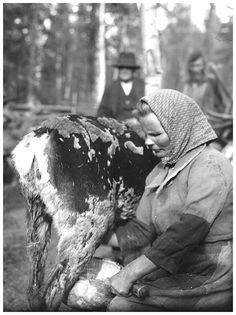 milking reindeer.   Lypsäjä, Länsipohja, Täräntö, 1932 Lypsäjä, Länsipohja, Täräntö, 1932 Herding Dogs, Paganism, Marimekko, Historical Photos, Archaeology, Old World, Arctic, Farming, Reindeer