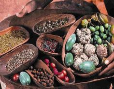 Permaculture & Gardening Courses, Bush food & beyond., Traditional Indigenous lifestyles and healing practices pre European settlement , Traditional ways of using various Indigenous plants for medicinal purposes, Promising new research into. Aboriginal Food, Aboriginal Culture, Australian Plants, Australian Bush, Native Australians, Gardening Courses, Native Plants, Permaculture, Spices