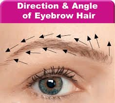 Image result for bulb of eyebrow