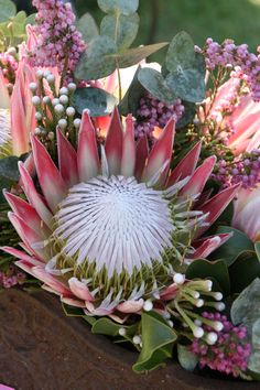 Spring brings King Proteas into season - Indigenous arrangement in a rusted urn by The Rose Cafe with King Proteas, silver brunia, pink ericas and penny gum, www.therosecafe.co.za
