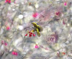 #771 小綠錯幻 | Flickr - Photo Sharing!