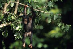 Impressionen des Queen Elizabeth Nationalparks auf einer Ruanda Reise