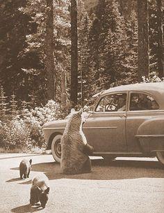 Roadtrip with bears!