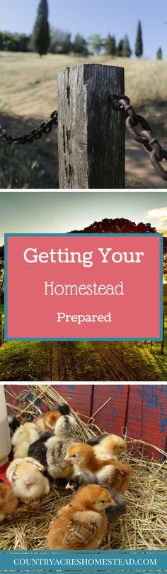 Getting Your Homeste