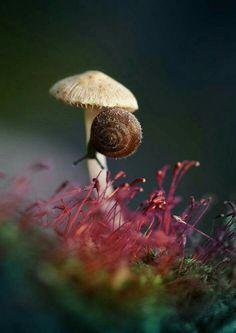 snail mushroom umbrella