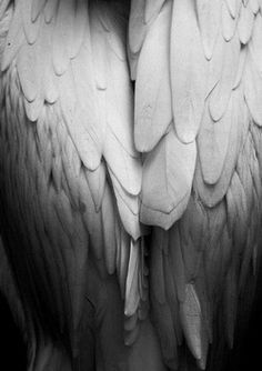 folded wings.....Perfect for my tattoo!!!! Now just need to make them into a heart shape, make them into a charcoal drawing...and get it done!