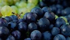 ¿Por qué comemos 12 uvas en año nuevo? Milk The Cow, Planting Potatoes, Bartlett Pears, Canadian Food, Apple Pear, Green Grapes, Growing Tree, Organic Farming, Blueberry
