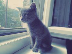 Little kitty *-*