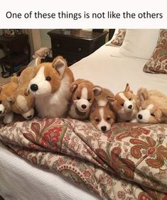 50 Animal Memes – Funnyfoto | Funny Pictures - Videos - Gifs - Page 7 #corgipictures