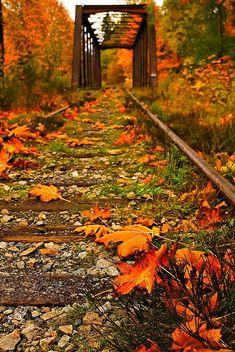 Outono - Vancouver I bela incrível