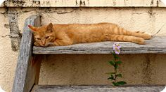 Chat et fleur (via bigorneau perceur)