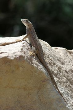 Reptiles, Lizard Terrarium, Small Lizards, Vivarium, Snakes, Animal Pictures, Garden, Nature, Animals