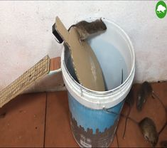 rat traps bucket - bucket rat trap + bucket rat trap how to build + diy rat trap bucket + 5 gallon bucket rat trap + rat trap with bucket + rat traps bucket + water bucket rat trap + 5 gal bucket rat trap Rat Trap Diy, Mouse Trap Diy, Best Mouse Trap, Mouse Traps That Work, Homemade Mouse Traps, Electric Mouse Trap, Bucket Mouse Trap, Survival Tools, Reclaimed Barn Wood