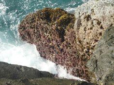 Karang merah gugusan karang pantai wediombo