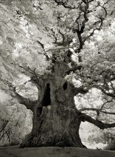 Ancient tree photography by Beth Moon, San Francisco All Nature, Nature Tree, Amazing Nature, Beautiful Dark Twisted Fantasy, Unique Trees, Old Trees, Tree Photography, Ocean Photography, Amazing Photography