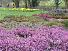 Heather Garden, RHS Wisley - geograph.org.uk - 711120