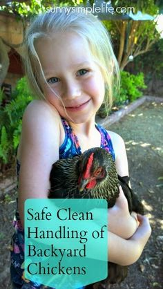 Safe Clean Handling of Backyard Chickens @sunnysimplelife.com #backyard #chickens #urban