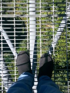 Who's scared of heights at Illawarra treetops walk?