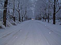 beautiful snowflake photos  | beautiful, snow, snowflakes, tree, white - inspiring picture on Favim ...