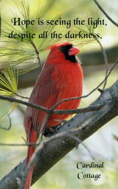 Cardinal from bird punch Cardinal Birds, Inspirational Thoughts, Words Of Encouragement, Cardinals, Beautiful Birds, Bible Quotes, Godly Quotes, Great Quotes, Cool Words