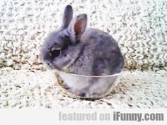 Just A Bunny In A Bowl