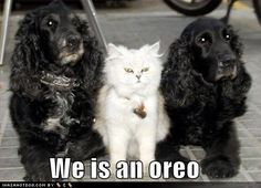 cute cat pictures with captions | funny+cat+pictures+with+captions+(119).jpg: Cats, Funny Animals, Dogs, Funny Pictures, Oreo, Funny Stuff, Funnies