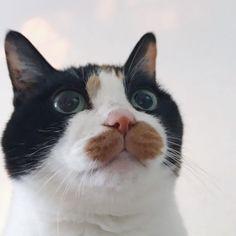 寒いわよ!! 。 。 。 。 #cat #cats#ねこ#ネコ#猫部#猫#ねこ部 #三毛猫#Tortoiseshellcat#チーム三毛猫#にゃんこ#はちわれ#catlover#にゃんこlove#catsofinstagram#picneko#ピクネコ#ペコねこ部