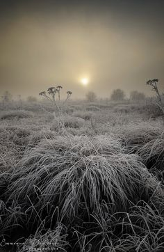 ~~Still life ~ A cold morning on the shores of Saint-Point lake in Franche-Comté - France by Emmanuel Dautriche~~