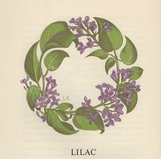 A Wreath Of Flower Legends Written in the by Rose Sydenham Dugdale it includes flower legends from all over the world and beautiful 'Flower Wreaths' illustrated by L Anne Ellis. Lilac Flowers, Botanical Flowers, Vintage Flowers, Plant Illustration, Botanical Illustration, Botanical Drawings, Botanical Prints, Logo Floral, Wreath Tattoo