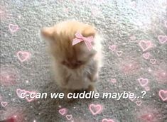 Cute Funny Animals, Cute Cats, Cat Memes, Funny Memes, Wholesome Pictures, Cute Love Memes, Funny Reaction Pictures, Cute Messages, Cat Aesthetic