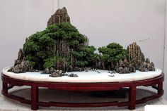 The Japanese art of bonsai, and its precursor, the Chinese art of penjing, are rooted in the traditions of Asian culture. Description from pinterest.com. I searched for this on bing.com/images