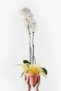 The most sophisticated and delicate looking plant for your home - the orchid.