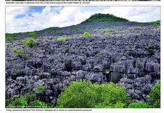 Selva de Pedra - Madagáscar