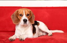 Cold Weather Hazards: Rodenticides  | Pet360 - Pet360 Pet Parenting Simplified