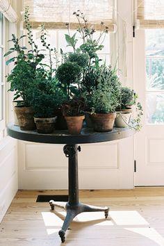 Vintage indoor garden idea.