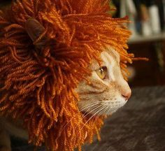 I should remember this idea for next year's Halloween costume!  Except I want a black mane to go with my gray hair.