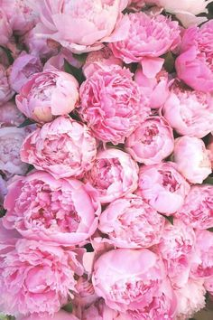I'll never get tired of Pink Peonies!