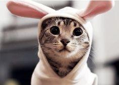 Rabbit cat