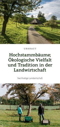 In der Schweiz prägen Hochstammbäume die Landschaft: Als Alleen säumen sie Strassen, in und um Dörfer stehen sie in Obstgärten und als Streuobstwiesen sind sie in allen Regionen vertreten. Es gibt viele Gründe, sie zu schützen, unter anderem bieten sie einensehr wichtigen Lebensraumfür seltene Tier- und Pflanzenarten. In einer nachhaltigen Landwirtschaft müssen Obstbaumwiesen mit Hochstammbäumen ihren Platz finden. #prospeciarara #hochstammschweiz #hochstamm #fructus Kraut, Regional, Golf Courses, Country Roads, Sustainable Farming, Rare Animals, Pedigree Chart, Sustainability, Switzerland