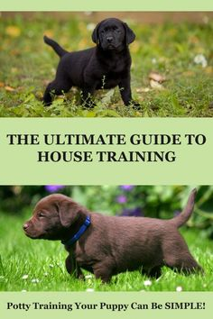 Pupy Training Treats - Your complete guide to every aspect of potty training. When to start house training your puppy, how to do it, and how to cope with problems. - How to train a puppy? Puppy Potty Training Tips, Training Your Dog, Leash Training, Toilet Training, House Training A Puppy, Labrador Puppy Training, Labrador Puppies, Training Collar, Crate Training