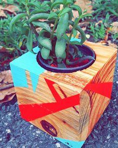 Trabajando cosas geométricas G E N I A L E S! Working on cool geometric stuff! Buenos días a todos los venezolanos trabajadores a los que no trabajan y son deshonestos no! Jum. (:  Regala vida regala colores regala VERDE! Fotografía de: @gvab25 #igersvenezuela #minijardin #succulove #terrarios #suculentas #crasulaceas #cactaceae #cactaceas #plantas  #regalaplantas #valencia #loveplants #hechoenvenezuela #igerscaracas #igersvalencia #valencia #venezuela #home #hogar #decoracion #in…