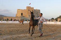 Arabian horses put to the test at Fujairah championship